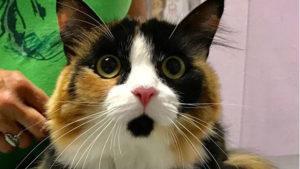 Feline Comprehensive Care | Courtenay Animal Hospital